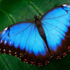 Why are butterflies so colorful?