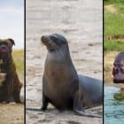 Can animals get a sunburn?