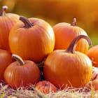 Why are pumpkins orange?