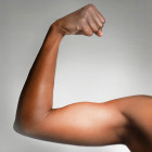 Why do your biceps bulge?