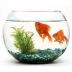 Why do you have to clean a fish tank but not a pond?