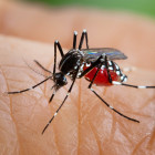 What's the best way to get rid of mosquitoes?