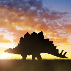 Why did the dinosaurs go extinct?
