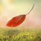 Where do fallen leaves go?