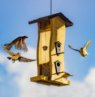 How could you get more birds to visit a bird feeder?