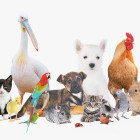 How many different kinds of animals are there?