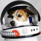 How long can people (and animals) survive in outer space?