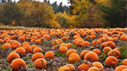 Why are pumpkins so popular every fall?