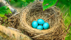 Why do birds lay eggs in the spring?