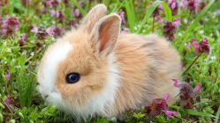 Why do baby animals look so cute?