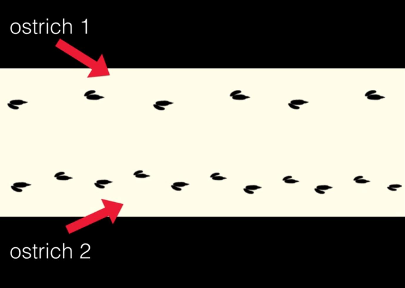 OstrichFootprints