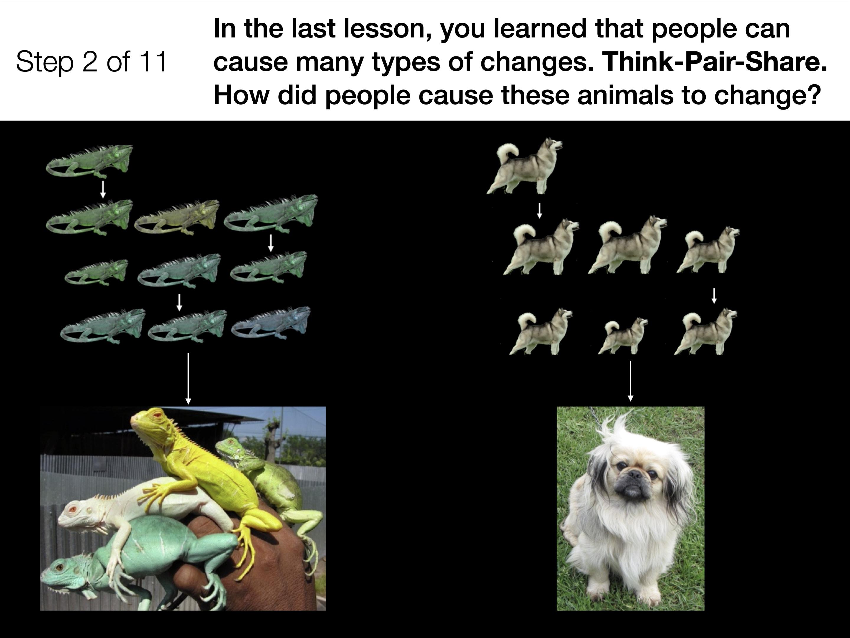 AnimalsM4Connection2