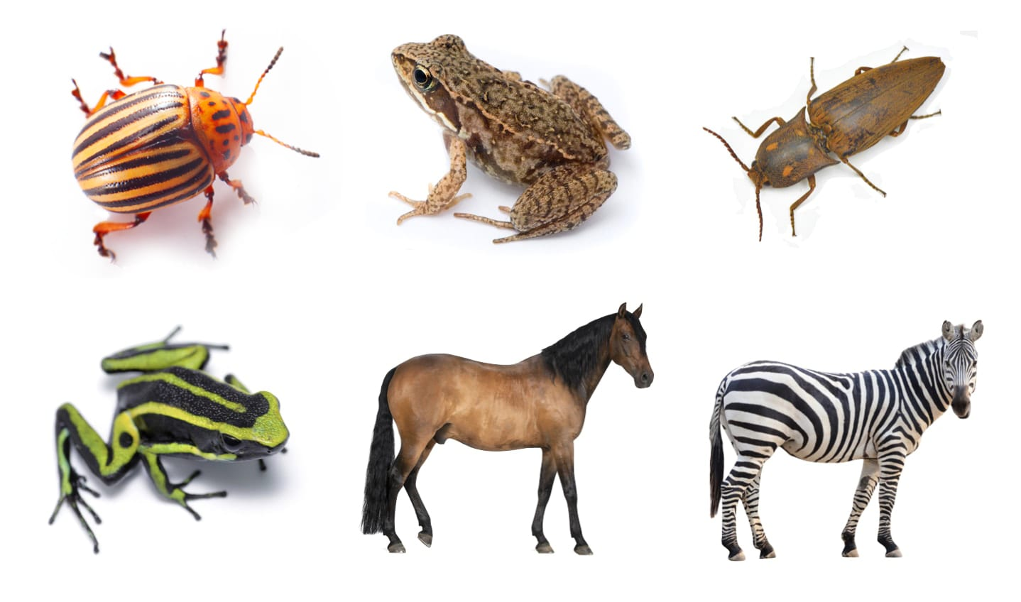 Six Animals