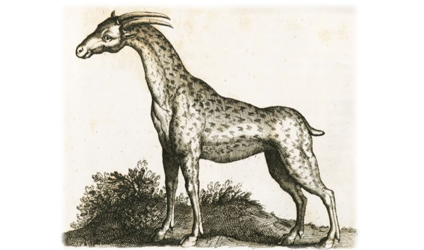 Camelopard Drawing