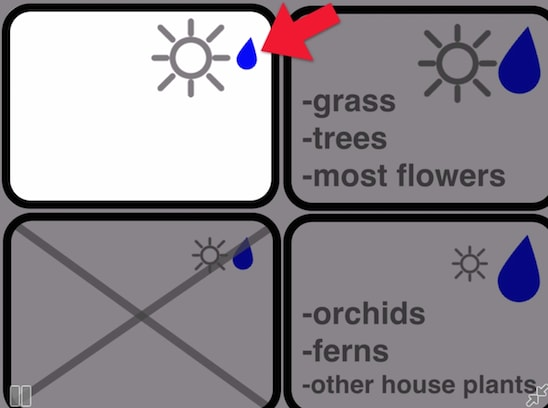 missing plant