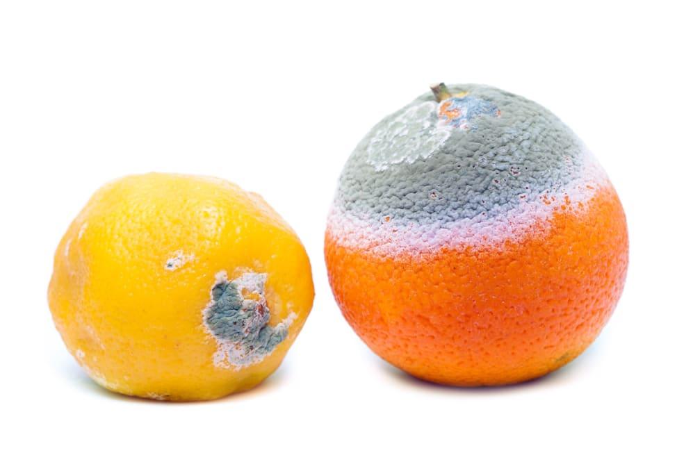 rotting lemons