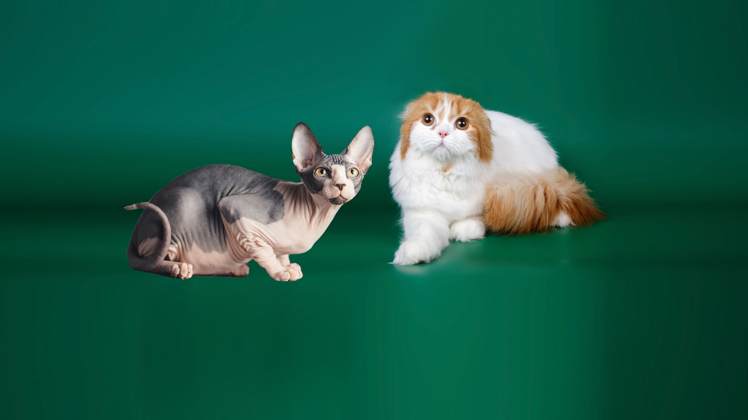 076 1st top5 cats 5 3