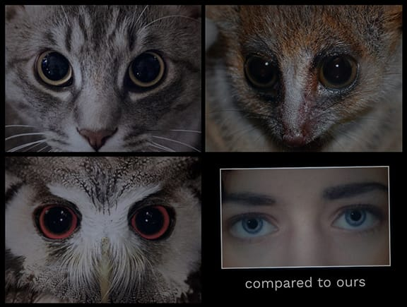 Eye Comparison