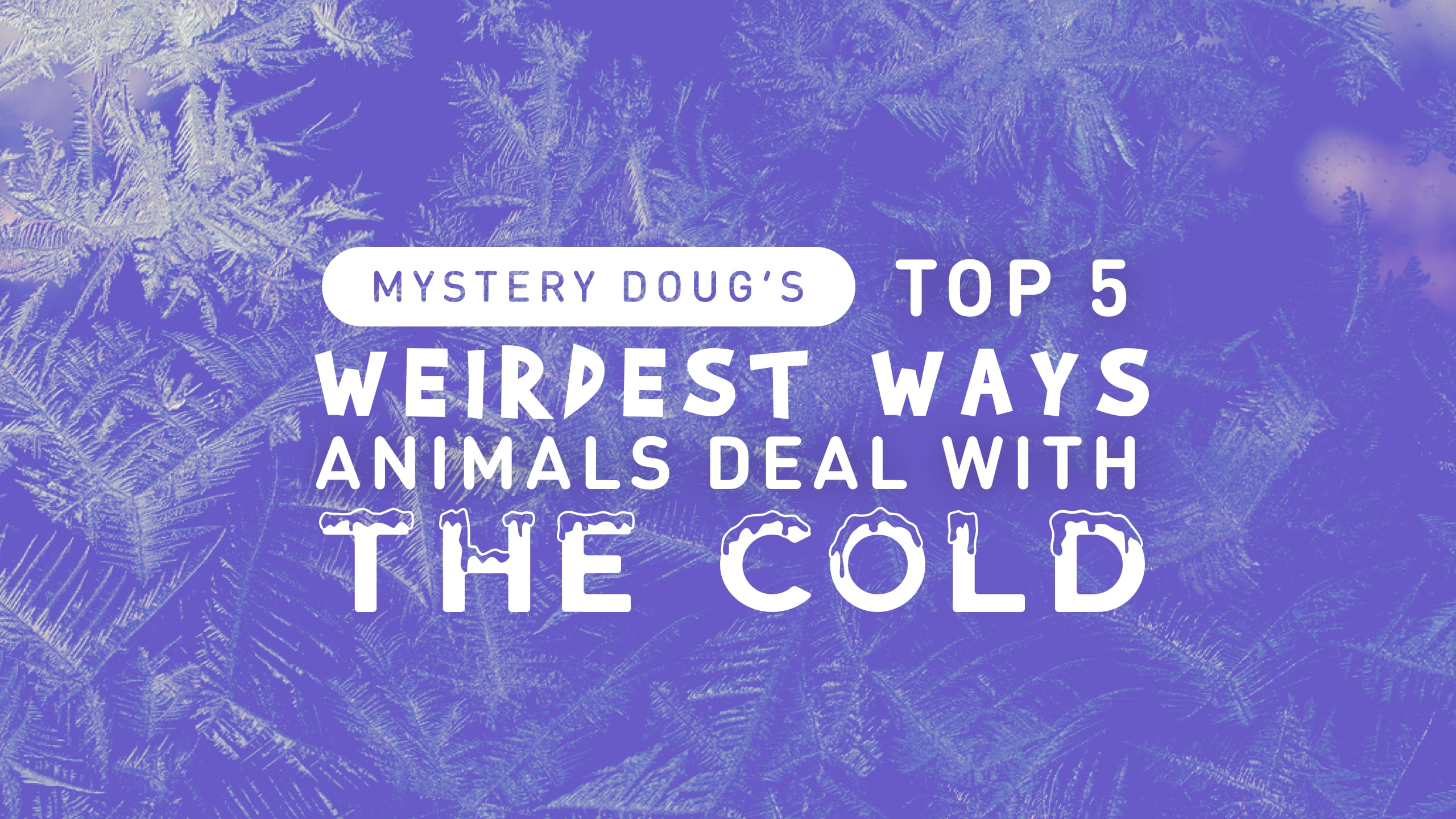 Top5 coldanimals title