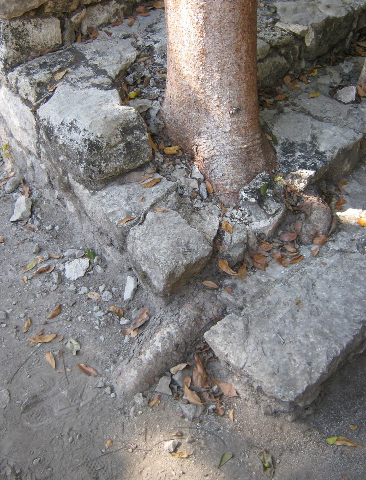 treebeforeremoval